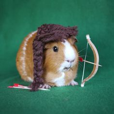 This #Katniss look-alike makes an awesome #guineapig #hungergames