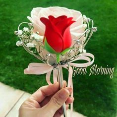 Monday Morning Images, Good Morning Happy Monday, Good Morning My Friend, Morning Love Quotes, Good Morning Post, Good Morning Flowers, Morning Pictures, Morning Wish, Good Morning Images