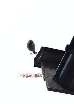 Bildegalleri :: Helgas-blikk