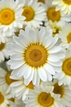 One of my favorite flowers because of its simplicity...Would love to happen upon a field full of daisies!! ~