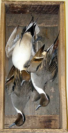 hanging duck mount ideas - Google Search