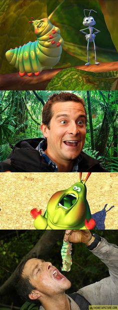 Funny pictures about Bear Grylls vs. A Bug's Life. Oh, and cool pics about Bear Grylls vs. A Bug's Life. Also, Bear Grylls vs. A Bug's Life. Bear Grylls, Funny Texts, Funny Jokes, Hilarious, Funny Animal Pictures, Funny Photos, A Bug's Life, Everything Funny, Just For Laughs