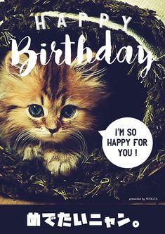 エレガントな猫のお誕生日お祝い画像