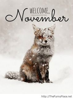 November is the eve of Christmas - Funny Pictures, Awesome Pictures, Funny Images and Pics on imgfave