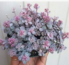 Suculentas y cactus Colorful Succulents, Succulents In Containers, Cacti And Succulents, Planting Succulents, Planting Flowers, Succulent Gardening, Garden Plants, Indoor Plants, House Plants