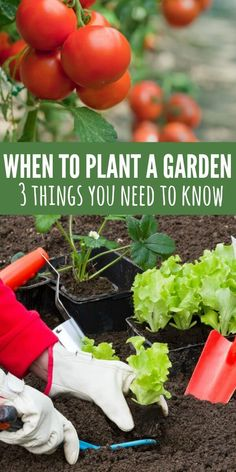 Learn when to plant a garden! Many people start their garden too late or too early. Find 3 tips on when to plant a vegetable garden! You will have all the information you need and know when to plant garden. From tomatoes and cucumbers to carrots and more!