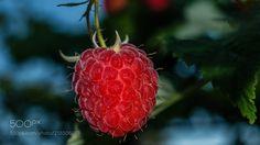 Raspberry (Milen Mladenov / Montana / Bulgaria) #NIKON D3200 #food #photo #delicious