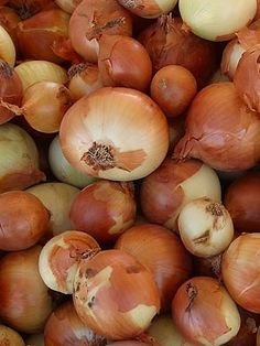 TEXAS 1015 Onions Released in 1983, this sweet onion is very tasty, and gets sweeter the bigger it gets. Its flattened yellow bulbs can weigh up to a pound or more and can be stored for up to two months if properly cured. Add bone meal to the soil before planting for extra phosphorous.