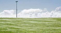 Teia gigante de aranha cobre campo na Nova Zelândia