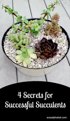 4 Secrets for Successful Succulents Have you ever killed a beautiful succulent in your care? Me too... but these 4 main secrets to growing healthy and thriving succulents have been my saving grace. (scheduled via http://www.tailwindapp.com?utm_source=pinterest&utm_medium=twpin&utm_content=post108771739&utm_campaign=scheduler_attribution)
