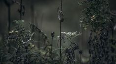 Scenes from the life of plants XXIX by Rita Rodner The Life, Nature, Plants, Naturaleza, Plant, Nature Illustration, Off Grid, Planets, Natural