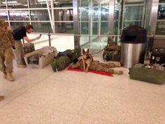 Dog protecting owner at airport. Aww!