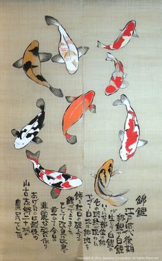 Image result for mini fairy koi fish drawn