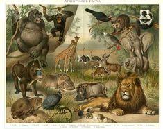fauna | Fauna « Informed Farmers