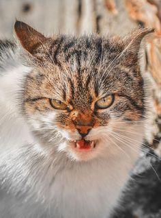 Les portraits de chats communs de Gabrielius Khiterer  2Tout2Rien