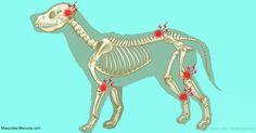 La osteoartritis es el tipo más común de artritis en las mascotas, y este tratamiento se centra en aliviar los síntomas y ralentizar su progresión. http://mascotas.mercola.com/sitios/mascotas/archivo/2017/04/01/signos-artritis-en-mascotas.aspx?utm_source=mascotas&utm_medium=email&utm_content=art1&utm_campaign=20170401&et_cid=DM138019&et_rid=1949126341
