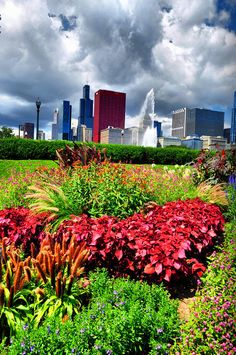 ✮ Chicago in Flowers