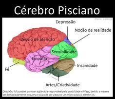 cérebro pisciano
