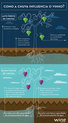 Descubra como a chuva, ou a falta dela, influencia a fabricação do vinho. #vinho…