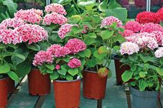 Shop confidently for flowers and shrubs - our industry experts show you the gardening basics to a better buying experience.