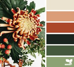 Wall Color Schemes Warm Design Seeds New Ideas Orange Color Palettes, Burnt Orange Color, Colour Pallette, Colour Schemes, Color Combos, Color Patterns, Orange Palette, Design Seeds, Color Harmony