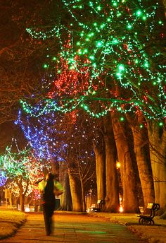 Commercial Christmas lighting on the Stray, Harrogate, by Lights4fun