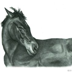 a sold portrait. #portraiture #graphitepencil #traditionalart #realism #petportrait #horsedrawing