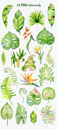 Tropical clipart, tropical leaves, floral clipart, Watercolor leaves, summer clipart, watercolor clipart, watercolor tropical, tropical leaf, , hand painted clipart, palm tree clipart, tropical summer, tropical invitation, jungle clipart With this file you will be able to create awesome