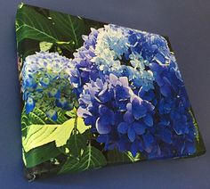 Blue Hydrangea Stretched Canvas Print by BlueHydrangeaCanvas Blue Hydrangea, Stretched Canvas Prints, Etsy
