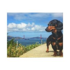 San Francisco Golden Gate Canvas Print - dog puppy dogs doggy pup hound love pet best friend