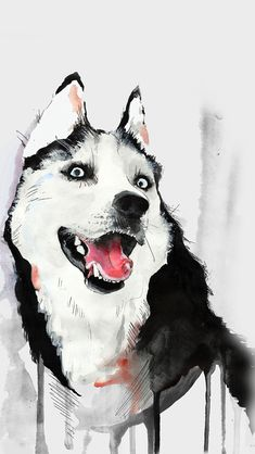 Husky Dog Watercolor Illustration #iPhone #5s #wallpaper