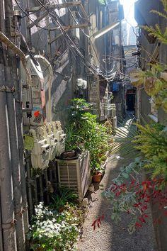 an alley ,Shinjuku