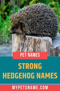 Hedgehogs are tiny creatures, but you can give them a large personality if you choose a larger-than-life name for them. Take a look at our list of strong Hedgehog names for some inspiration. Hedgehog Names, Hedgehog Pet, Shadow The Hedgehog, Funny Names, Pet Names, Ancient Egyptian Cities, Norse Names, Happy Names, German Names