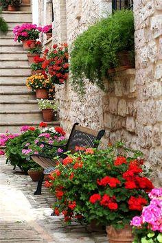 Flowers of Spello, Perugia, Italy, Umbria