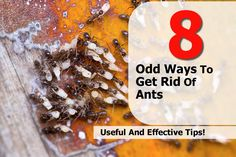 Household Pests, Household Chores, Home Remedies, Natural Remedies, Get Rid Of Ants, Pest Control, Bug Control, Things To Know, Gardening Tips