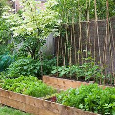 Raised vegetable beds, trellis.