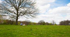 Richmond Park engagement picnic