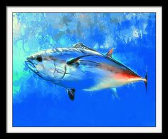 Bluefin Framed Print featuring the painting Bluefin Tuna Portrait 2 by Scott Wallace