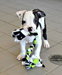 Luke-  Wanna play?!?! I'm looking for a fun, active home that I can have lots of fun in. Could you be the home that I've been looking for?  Click on Luke's picture for more information