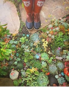 Happy Sunday  check out this beautiful succulent garden   Follow @ecoconltd for more inspiring posts!  -  Want to be featured? Use the hashtag #ecoconftme :)  @kellogggarden