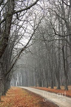 Foggy Forest In Winter In Matra Hungary- Photography