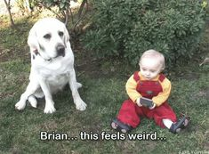 wow, real life brian and stewie griffin Griffin Family, Stewie Griffin, Baby Memes, Rey Star Wars, American Dad, Smosh, Original Movie, Funny Animal Memes, Baby Dogs