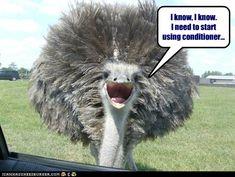 (funny animals) funny animals funny animal pictures of the day 21 pics 27 Animal Captions, Funny Captions, Animal Jokes, Funny Animal Memes, Funny Animal Pictures, Cute Funny Animals, Funny Cute, Animal Funnies, Animal Pics