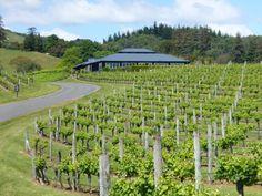 Black Barn Vineyard - Sunny Hawkes Bay, New Zealand