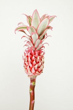 pink pineapple - http://www.creaturesofcomfort.us/our_line/ss12/