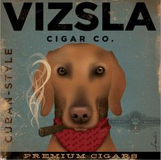 Vizsla CIGAR company advertising style artwork on gallery wrapped canvas  by stephen fowler