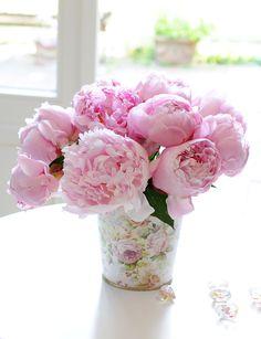 """ROSAFARBENE PFINGSTROSEN // Der Mai und der Juni sind eine wundervolle Zeit: Denn da sind die #Liebhaber der #Pfingstrose in ihrem Element. Pfingstrosen der Sorte """"Alertie®"""" in rosa, an den sich die Empfängerin aber auch noch im August erinnern wird. Versprochen! #bauernrose #peonie #blume #blumenstrauß #geschenk #pastell // Lieferbar bis zum 30.06.2015"""