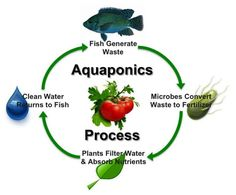 If you are interested in being more self-sufficient by growing your own food, then aquaponics might be the best solution for you! This pin will tell you all the basics you need to know about this great way to grow your own food using a system that uses fish waste to fertilize the plants! #aquaponics #selfsufficient #food Aquaponics System, Aquaponics Greenhouse, Backyard Aquaponics, Aquaponics Fish, Hydroponics, Smart Garden, Garden Guide, Plant Growth, Seed Starting