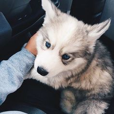 U dogs love animals pets Animals And Pets, Baby Animals, Funny Animals, Cute Animals, Cute Puppies, Cute Dogs, Dogs And Puppies, Doggies, Silly Dogs