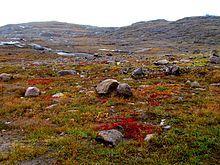 Nunavut tundra -c - Northern Canada - Wikipedia, the free encyclopedia, Nunavut snow melt spring @ Hudson Bay (septic field) Arctic Tundra, Northern Canada, Nature Plants, Ecology, Mother Nature, Habitats, Scenery, Explore, Snow Melt